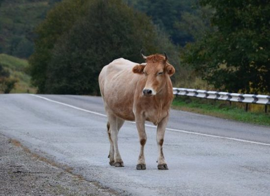 How the NBG truck driver avoided collision with an animal